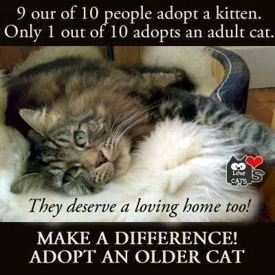 Adopt an Older Cat - OSCAR Animal Rescue in Sparta, NJ