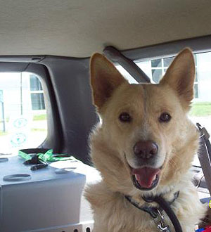 Volunteer to Transport Dogs to OSCAR Animal Rescue in Sparta, NJ